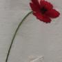 무명과 들꽃
