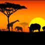 아프리카를 꿈꾸다